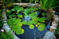 Небольшое, в форме сердц озеро во дворе дедов страны стоковые изображения rf