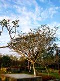 Небольшое дерево в предпосылке парка и голубого неба стоковые изображения rf