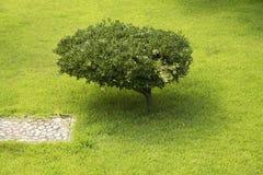 Небольшое дерево стоковые изображения