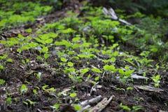 Небольшое зарево надежды в национальном парке скалистой горы стоковые фото