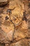 Небольшое изолированное дерево показывающ силу природы стоковая фотография