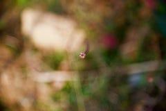 Небольшое красное фото верхних частей цветков уникальное стоковое фото