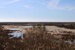 Небольшое озеро в засушливой зоне стоковое изображение rf