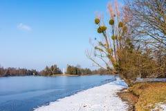 Небольшое озеро в зиме и снеге Деревья около воды стоковая фотография rf