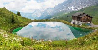 Небольшое озеро окруженное wildflowers, назначение Швейцария scheidegg kleine туристское стоковая фотография rf