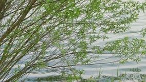 Небольшое озеро с деревьями сток-видео