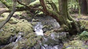 Небольшое река пропуская через утесы Ирландии видеоматериал