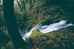 Небольшое река с сильным током бежать на холме в лесе стоковое фото rf
