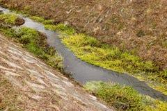 Небольшое река через парк стоковое фото rf