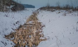 Небольшое canall с сухими засорителями в нем покрыло со снегом стоковое фото rf