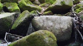 Небольшой водопад в лесе на потоке видеоматериал