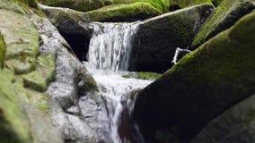 Небольшой водопад в лесе на потоке сток-видео