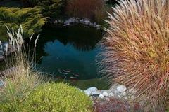 Небольшой декоративный пруд в котором плавая карп стоковая фотография rf