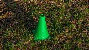 Небольшой зеленый конус в поле травы во время золотого часа захода солнца стоковое фото rf