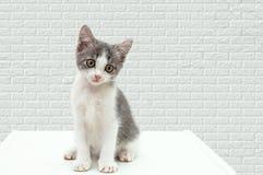 Небольшой котенок сидит на уличном бордюре стоковые фотографии rf