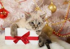 Небольшой котенок с подарком стоковые изображения rf
