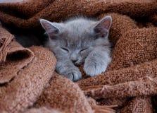 небольшой кот спит стоковое изображение