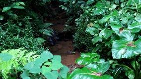 Небольшой поток в лесе сток-видео