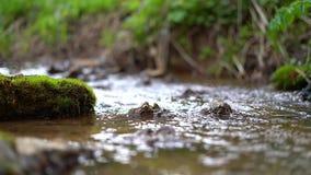 Небольшой поток леса видеоматериал