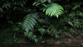 Небольшой поток с большими зелеными листьями двигая в ветер в тропическом тропическом лесе сток-видео