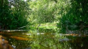 Небольшой пруд окруженный зелеными деревьями и травой акции видеоматериалы