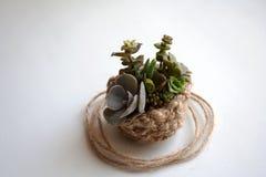 Небольшой состав succulents в связанной корзине стоковая фотография