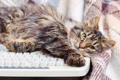 Небольшой striped кот около клавиатуры компьютера Избежание work_ стоковые изображения