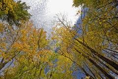 небоскребы осени Стоковое Фото