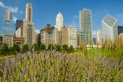 небоскребы chicago Стоковое Изображение