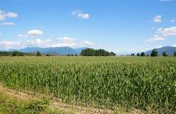 небо ландшафта травы нивы Стоковая Фотография