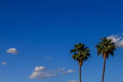 небо ладоней Стоковое Фото