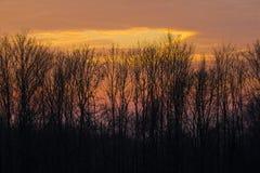 Небо вечера за деревьями Стоковое Изображение