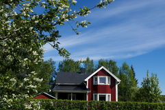 небо вишни птицы Стоковые Изображения RF