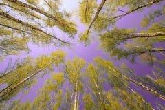 Небо волшебного яркого леса солнца весны красивое солнечное голубое Стоковые Фото