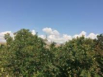 Небо в Арарате Стоковые Изображения