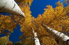 небо в октябре Стоковые Изображения RF