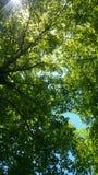 Небо в середине леса стоковые изображения rf