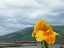 Небо гор цветка точки зрения Стоковые Фото
