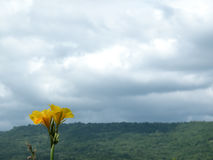Небо гор цветка точки зрения Стоковое Изображение
