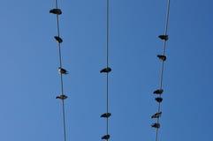 Небо голубей голубое Стоковое Изображение
