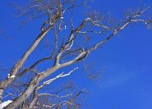 Небо дерева бука ветви голубое стоковые фотографии rf