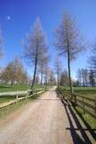 небо дороги травы Стоковое Изображение RF