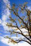 небо дуба осени стоковое изображение