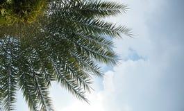 Небо дерева и ясности голубое Стоковые Изображения