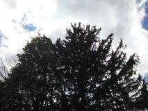 Небо дерева стоковое изображение rf
