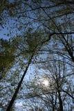 Небо & деревья Стоковая Фотография