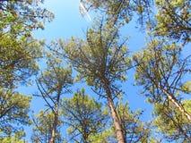 Небо леса в севере Португалии Стоковое Изображение RF