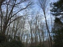 Небо леса стоковое фото rf