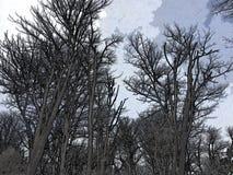 Небо леса стоковая фотография