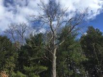 Небо леса стоковое фото